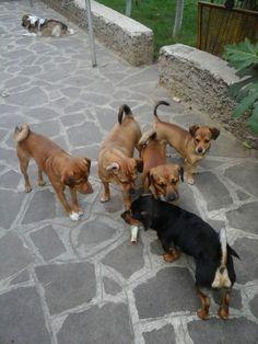 Puppi, Pucci, Lili, Dylan, Zeus, Moncli