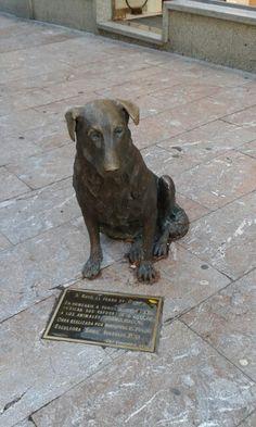 """Rufo """"el perro callejero de Oviedo"""""""