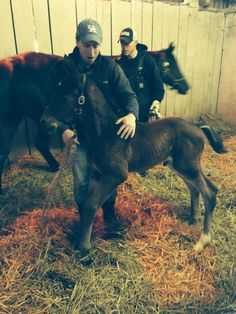 168lbs. @ foaling!!!! Miracle Union Rags-Mother Russia colt