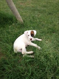 Zoey when we first got her