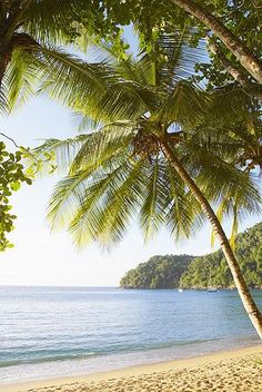Englishman's Bay, Trinidad and Tobago Set against a backdrop of towering rainforest, this beach is referred to by locals as Tobago's jewel.