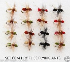 16 dry trout fly #fishing #flies #flying ants for rod reel line s68m,  View more on the LINK: 	http://www.zeppy.io/product/gb/2/151585002780/