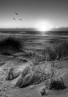 A flight of birds at sunrise on Ocracoke Island on the Outer Banks of North Carolina.  A black & white fine art print. Main website: http://www.picturenorthcarolina.com Fine art gallery (buy prints): http://www.dan-carmichael.artistwebsites.com/index.html