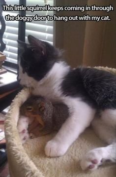 Squirrel hang out with cat !
