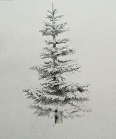 Image Credit:  The above is a good pencil drawing of an evergreen. When I was a kid, I worked hard, learning to draw the typical, holiday Christmas tree, painstakingly making both sides exactly a…