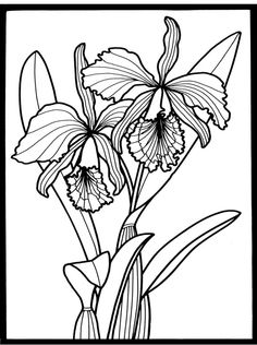 Nature Orchid Image By Tharens
