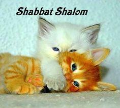 Shabbat Shalom                                                                                                                                                      Más