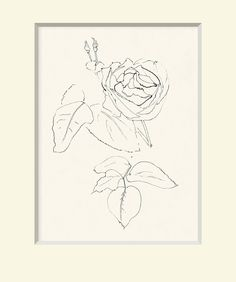 Matisse Sketch, Rose No. 2
