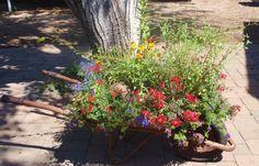 2014 BBY - Linda's garden - an old wheelbarrow get a second life as a planter
