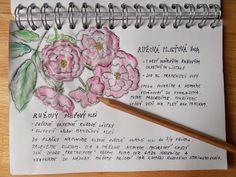 V záhrade nám krásne vonia RUŽA / ROSA biely ružový krík. Tá vôňa je opojná. Rada by som tieto esencie preniesla do domáceho bio ružového ol...