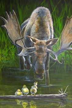 Duck Duck Moose Painting by Scott Thompson - Duck Duck Moose Fine Art Prints and Posters for Sale