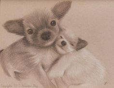 Chiens migons / Cute dogs, 2013