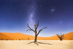 """MERIT WINNER A Night at Deadvlei Photo and caption by Beth McCarley    The night before returning to Windhoek, we spent several hours at Deadvlei, in Namib-Naukluft National Park, Namibia. The moon was bright enough to illuminate the sand dunes in the distance, but the skies were still dark enough to clearly see the Milky Way and Magellanic Clouds. Deadvlei means """"dead marsh."""" The camelthorn trees are believed to be about 900 years old but have not decomposed because the environment is so…"""