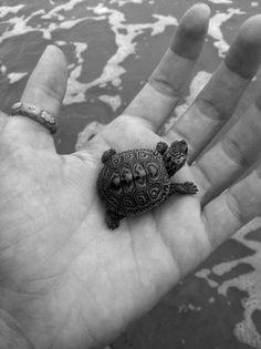 Pequeña tortuga en la mano