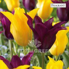 #Trend #Flowerbulbs #Landscaping #Landscape #Flowers #Colors #Colorful #Bulbs #Gardening #Garden #SpringGarden #Spring #FallPlanting