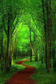 Enchanted forest in Ireland