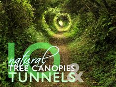 natural tunnels, tree tunnels, tree canopies, flower canopies, flowering trees, bamboo path, travel destinations, Inhabitots