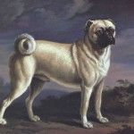 Richard Ramsey Reinagle – Pug