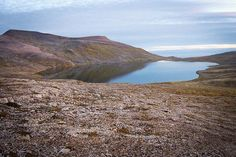 A Toxic Threat Reaches a Remote Arctic Island   TakePart