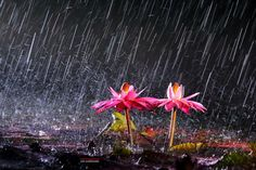A heavy rainy night by LEE INHWAN on 500px