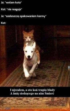 Polish Memes, Funny Memes, Hilarious, True Stories, Keanu Reeves, Animals And Pets, Life Lessons, League Of Legends, Haha