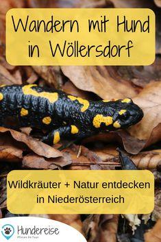 Salamander, Austria, Dogs, Nature, Places, Hiking Trails, Vacation Travel, Road Trip Destinations, Explore
