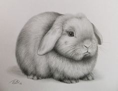 Realistic Pencil Drawings Animal | weekly flickr flickr blog create upload sign in explore recent photos ...
