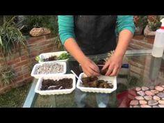 Jardín embotellado con Happy Pot - YouTube