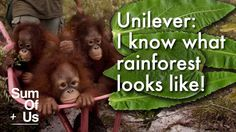 "Petition: Withdraw from the High Carbon Stock forest ""study"" currently proposed by some of the worst players in the palm oil industry. This is a clear attempt to undermine progress towards true deforestation-free palm oil production, and Unilever should play no part in it."