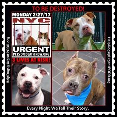 TO BE DESTROYED 02/27/17 - - Info   To rescue a Death Row Dog, Please read this:http://information.urgentpodr.org/adoption-info-and-list-of-rescues/  To view the full album, please click here:http://nycdogs.urgentpodr.org/tbd-dogs-page/ -  Click for info & Current Status: http://nycdogs.urgentpodr.org/to-be-destroyed-4915/