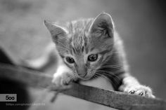 gato by pedrolopesphotography. Please Like http://fb.me/go4photos and Follow @go4fotos Thank You. :-)