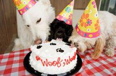 dog birthday bash