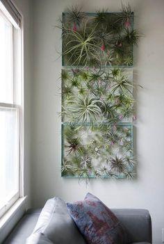tableau végétal moderne pour exhiber les plantes sans terre avec style