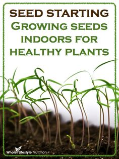 Seed Starting - Growing Seeds Indoors For Healthy Plants | WholeLifestyleNutrition.com