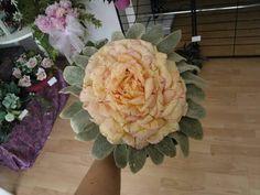 Rose glamelia