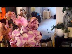 198 zvedava kamera vitejte v kralovstvi orchideji jak je spravne pestovat video 360p - YouTube