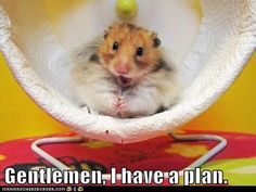 #animals #pets #funny #cute #hamsters Pet Insurance for Dogs and Cats in Australia - http://www.kangabulletin.com/1300-pet-insurance-australia #pet #insurance #australia #price pet insurance rspca and pet insurance bupa