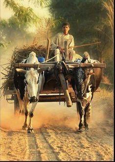 Bullock Cart, Agriculture Photos, Village Photography, Village Photos, Village Girl, Indian Village, India Culture, Indian Art Paintings, Scenery Wallpaper