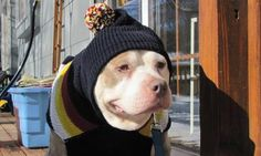 """""""Fospice"""" Gives Terminally Ill Shelter Dogs Chance at a Happy Ending Second-Chance-Animal-Rescue-submitted-dog-in-hat Dog Love, Puppy Love, Dog Died, Adoption, Foster Dog, Sick Dog, Dog Stories, All Gods Creatures, Shelter Dogs"""