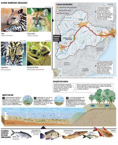 O Globo - Espécies da fauna e da flora do Rio Doce ameaçadas