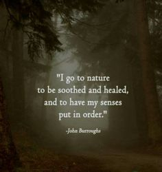 TOP NATURE quotes and sayings by famous authors like John Burroughs : I go to nature to be soothed and healed and to have my senses put in order. Great Quotes, Quotes To Live By, Me Quotes, Inspirational Quotes, Peace Quotes, Motivational, The Words, Nature Quotes Adventure, Travel Quotes