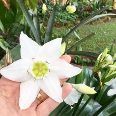 Pq o jardim da minha mãe é LINDO cheinho de VIDA!  #flores #vida #jardimdamamis #elaétudo #jardimflorido #primavera #amo #mesdasflores #nightnight #instablogger #instaflowers