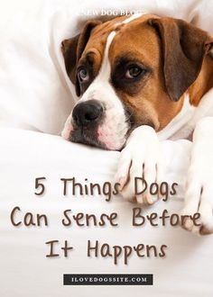 5 Incredible Things Dogs Sense Before They Happen