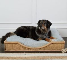 Sarah Bartholomew for Pottery Barn Wicker Rattan Dog Bed Pottery Barn, Cute Bedding, Bedding Sets, Dog Training Techniques, Dog Furniture, Natural Bedding, Pet Beds, Dog Accessories, Bed Covers