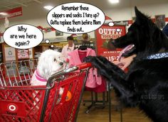 .It's A.J. pushing a grocery cart! The kids wanted to take her to one of those stores where you can take your pet. I told them everything would be eaten or destroyed. LOL