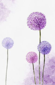 Creative hand-painted flowers, Dandelion, Flower PNG and PSD Flores Allium, Allium Flowers, Watercolor Cards, Watercolor Flowers, Watercolor Paintings, Watercolour, Art Floral, Art Violet, Dandelion Wallpaper