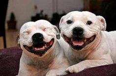 Smile dogs