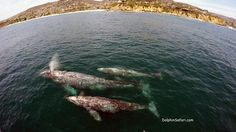 Drone Captures Stunning Footage Of Very Special Whale Family
