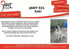 Sweet Suki is in need of a new home  #jawt #rescue #Akita