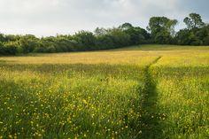 Boynes Meadows 2013 - Meadow Path | Flickr - Photo Sharing!